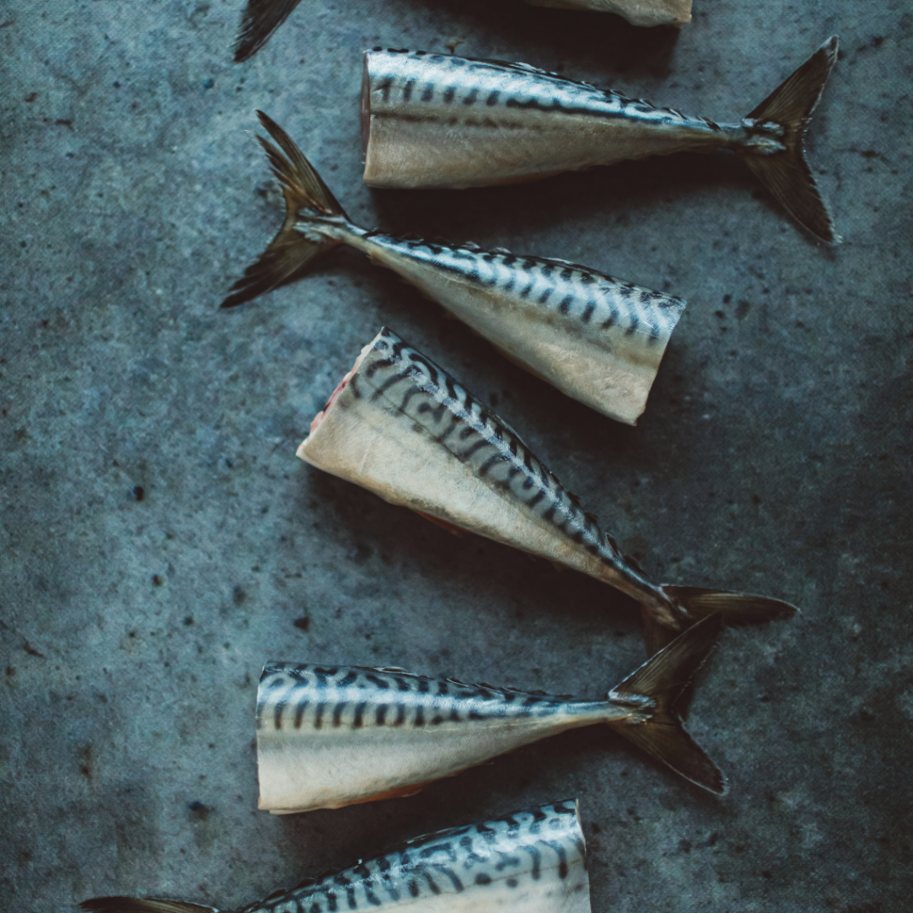 Makreel fileren
